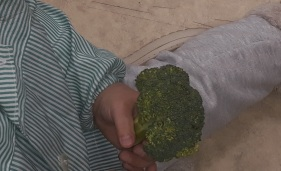 verduras4